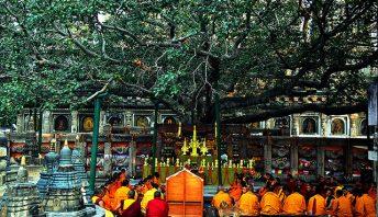 the-bodhi-tree