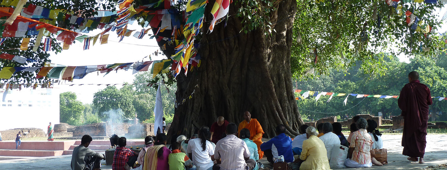 the-bodhi-tree-cvr